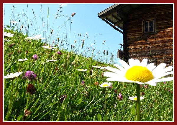 Landgasthof Schwaiger Breitenbach Tirol - Heimat